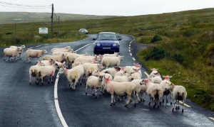 Peak Hour Traffic in Donegal - Traffic Jam in Donegal